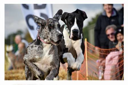 The Weald Park Festivals of Dogs