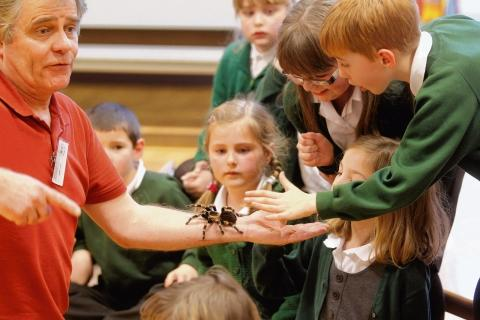 Children get close to tarantula and bugs