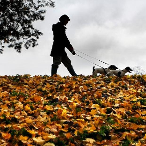 Harwich and Manningtree Standard: Dog owners in the New Forest have been warned of the threat of disease after a number of pets died