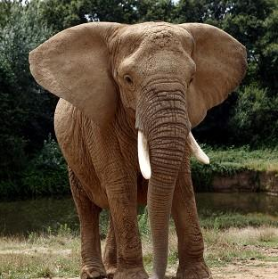 An elephant in South Africa caused a serious injury to Sarah Brooks when it attacked her car