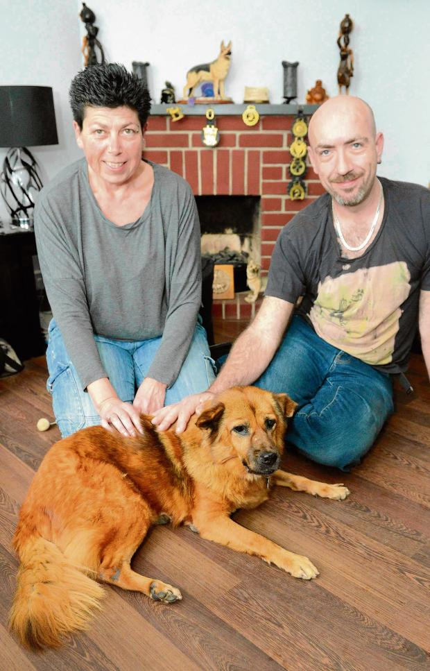 Harwich and Manningtree Standard: Dog rescued from streets of Thailand