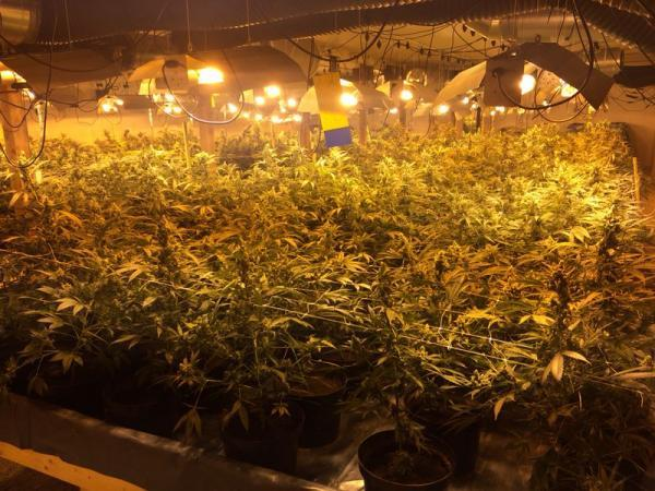 Thousands of cannabis plants discovered at former chicken factory