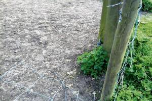 Vandals put horses at risk after cutting fence
