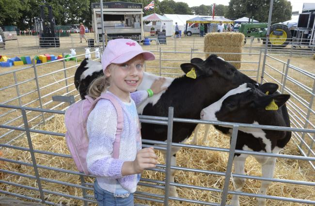 Tendring Show. Manningtree..Kelies McElroy, 8, with a calf.